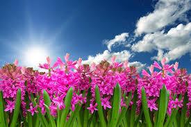 Nyt haveanlæg til foråret